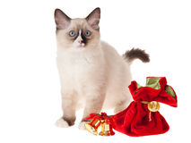 Ragdoll kitten with christmas decorations isolated. Ragdoll kitten with gold bells isolated on white Stock Images