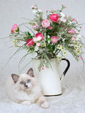 Ragdoll kitten on cream taffeta with flowers. Cute Ragdoll kitten with flower arrangement, on white cream taffeta Royalty Free Stock Image