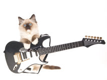 Ragdoll kitten with mini electric guitar. Cute Ragdoll kitten with miniature black and silver electric guitar, on white background stock photo