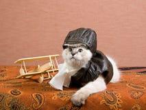 Ragdoll kitten with miniature biplane Royalty Free Stock Image