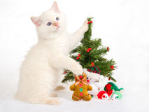 Ragdoll Kitten With Christmas Tree And Toys Stock Photography