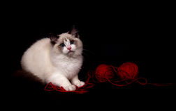 Ragdoll and red ball of yarn Royalty Free Stock Images