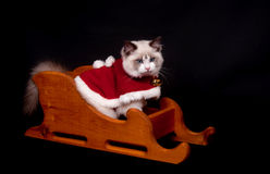 Ragdoll in a sled Royalty Free Stock Images