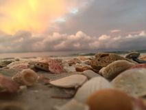 Rage. Seashells washed up on Obama city beach from the Gulf of Mexico Royalty Free Stock Photos