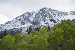 Ragen Sie mit mit einer Kappe bedeckten Bergen Utahs Schnee mit dem Rollen von grünen Hügeln empor Stockfoto