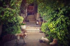 Ragged κομψό άνετο patio του παλαιού σπιτιού στοκ φωτογραφία με δικαίωμα ελεύθερης χρήσης