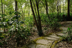Ragged flagstone pavement in shady woods of spring Royalty Free Stock Photos