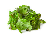Ragged lettuce salad leaf Royalty Free Stock Image