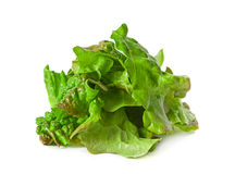 Ragged lettuce salad leaf Royalty Free Stock Photos