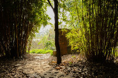 Ragged pavement in shady bamboo on sunny spring Royalty Free Stock Photo
