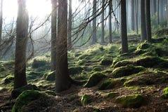Raggi attraverso gli alberi Fotografia Stock Libera da Diritti