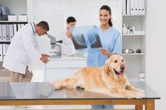 Raggi x d'esame dei cani del collega veterinario fotografie stock libere da diritti