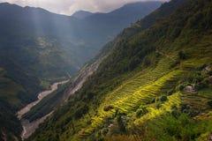 Raggi del overrice della luce a terrazze nell'area di conservazione di Annapurna, Nepal Immagini Stock Libere da Diritti