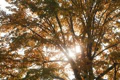 Raggi del sole attraverso i rami Immagini Stock Libere da Diritti
