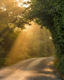Raggi del sole di autunno in distretto di punta Immagini Stock Libere da Diritti