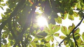 Raggi del sole tramite le foglie archivi video
