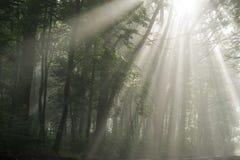 Raggi del Sun Immagini Stock