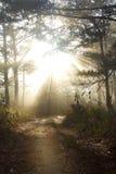 Raggi del Sun Immagine Stock