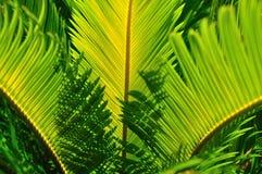 Raggi delle rotture del sole tramite le foglie. Fotografie Stock Libere da Diritti