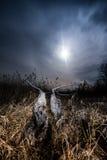 Raggi di alone della luna piena - paesaggio della luna piena di notte Immagine Stock