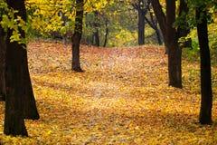 Raggi di autunno del paesaggio del sole/bella natura del paesaggio di fotografie stock libere da diritti