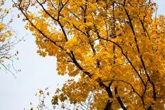 Raggi di autunno del paesaggio del sole/bella natura del paesaggio di fotografia stock libera da diritti