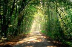 Raggi di indicatore luminoso fotografie stock libere da diritti