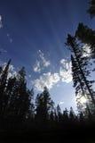 Raggi di indicatore luminoso e degli alberi Fotografia Stock