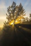 Raggi di luce Fotografia Stock