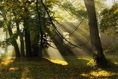Raggi di mattina delle luci Fotografia Stock