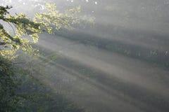 Raggi di sole Immagini Stock Libere da Diritti