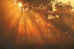 Raggi di sole caldi di autunno Immagini Stock