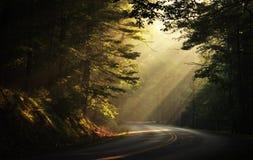 Raggi di sole di primo mattino nel legno Fotografie Stock Libere da Diritti