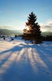 Raggi di sole dietro l'albero attillato nelle alpi di inverno Immagine Stock Libera da Diritti