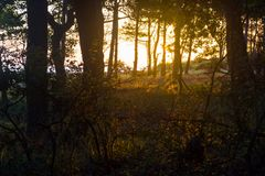 Raggi di sole in foresta Fotografia Stock