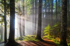 Raggi di sole lungo le tracce di escursione Fotografia Stock