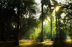 Raggi di sole nel parco Fotografia Stock Libera da Diritti