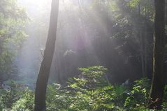 Raggi di sole nella foresta immagine stock libera da diritti