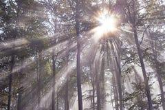 Raggi di Sun Immagini Stock
