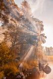 Raggi di Sun attraverso il fogliame Foresta d'autunno Immagine Stock
