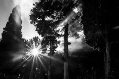 Raggi di Sun attraverso il fumo della foresta Fotografia Stock Libera da Diritti