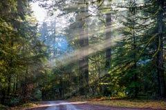 Raggi di Sun attraverso il legno immagine stock libera da diritti