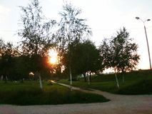 Raggi di Sun attraverso le betulle Fotografia Stock