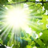 Raggi di Sun attraverso le filiali di albero Fotografie Stock