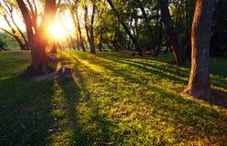 Raggi di Sun in foresta Fotografie Stock Libere da Diritti
