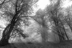 Raggi di Sun nella foresta Fotografie Stock