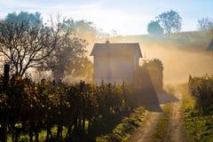 Raggi di Sun nella vista della vigna della nebbia di mattina Fotografie Stock