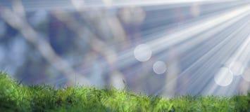 Raggi di Sun su erba fotografia stock