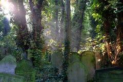 Raggi di Sun sulle tombe invase in cimitero Fotografia Stock Libera da Diritti