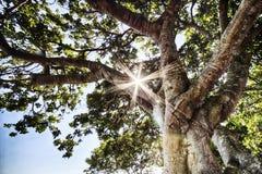 Raggi di Sun tramite le foglie fotografia stock